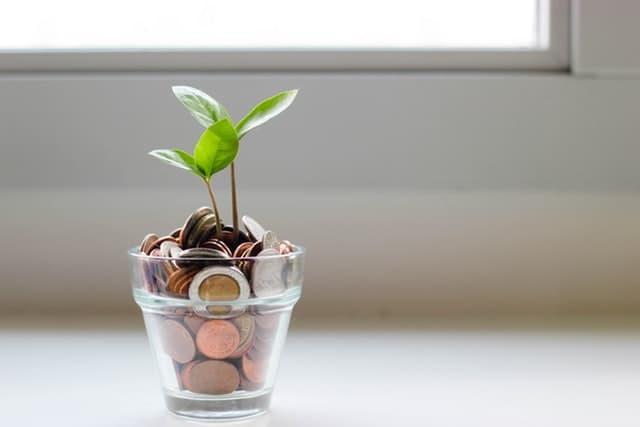 Dinero en planta
